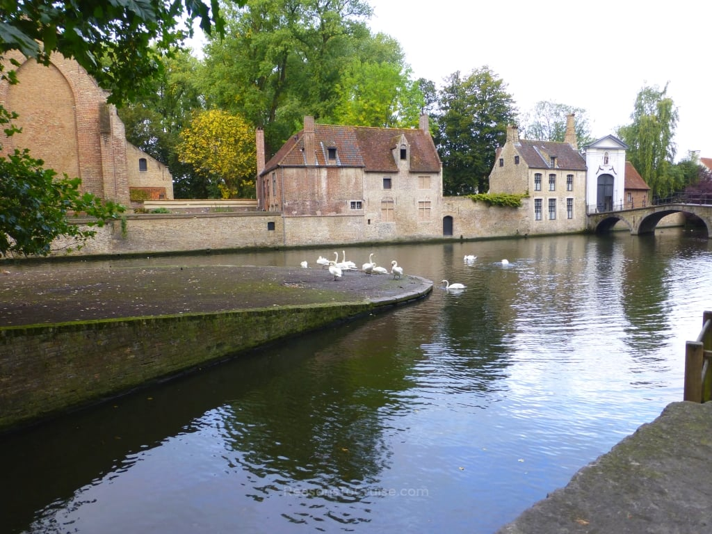 Wildlife at Bruges' canals