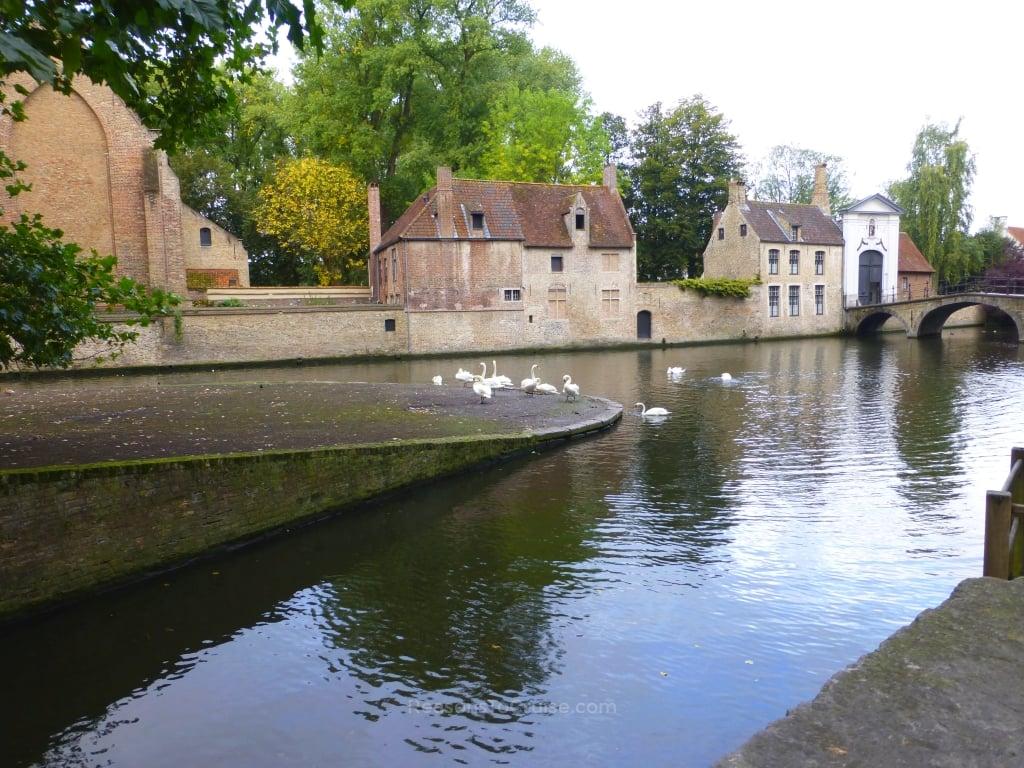 Wildlife at Bruges' canals