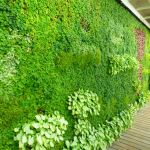 Living Wall at Trident Bar And Grill on Crystal Symphony